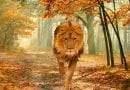 معلومات عن حيوان الأسد الأفريقي