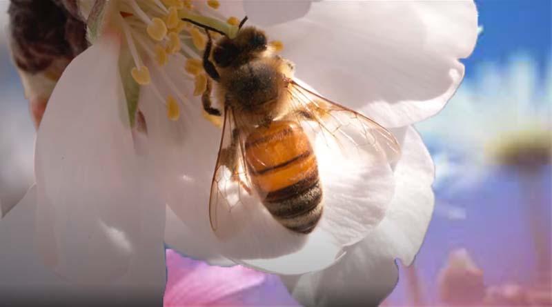 معلومات عن نحل العسل