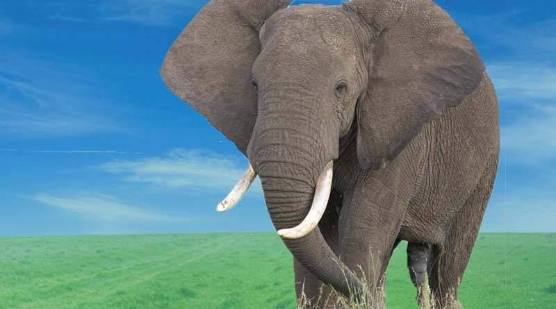 تعرف على قصة الفيل جامبو المحزنة