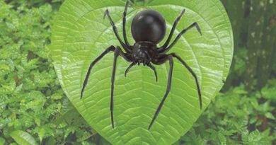 معلومات عن حيوان العنكبوت