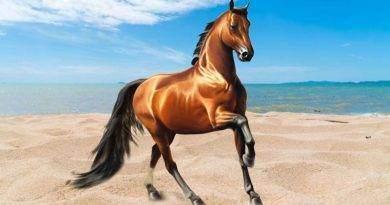 أكثر 11 حقائق غريبة عن الحصان التي لا تعرفها