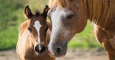 معلومات مهمة عن الحصان