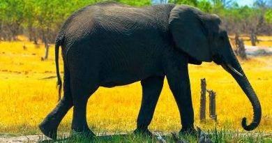 أين يعيش الفيل ؟