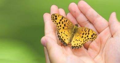 تعرف على بعض المعلومات حول الفراشات