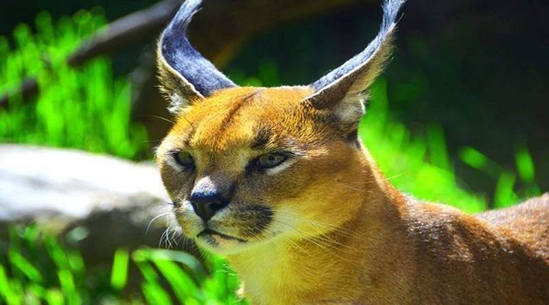 معلومات عن حيوان عناق الأرض