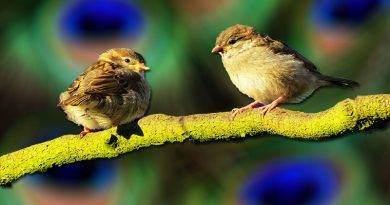 تعرف على بعض المعلومات عن الطيور