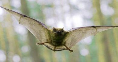 ما لا تعرفه عن خفافيش الفاكهة