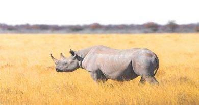 معلومات عن وحيد القرن الأبيض