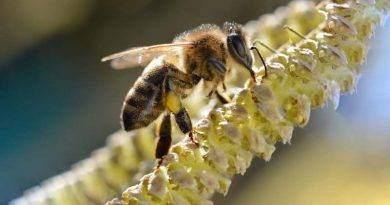 أين يعيش النحل ؟
