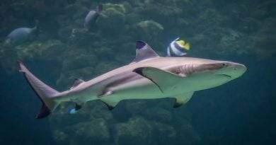 أنواع أسماك القرش بالصور
