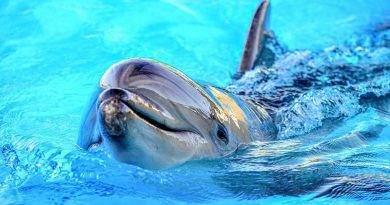 كم يعيش الدلفين ؟