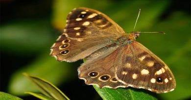 تعرف على معلومات حول أجنحة الفراشات
