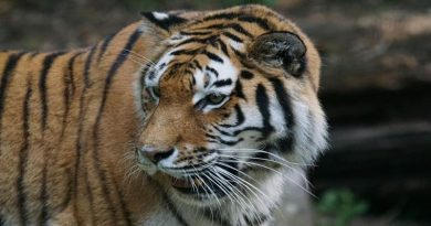 صفات نمر ملطخ