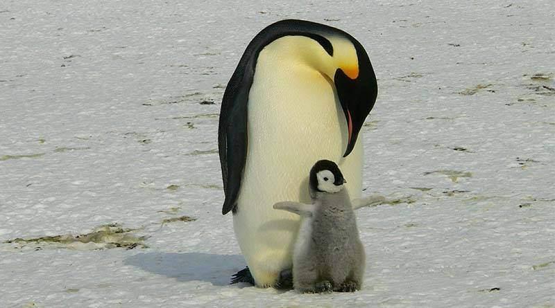 البطريق الإمبراطوري