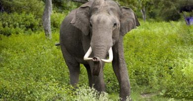 اين يعيش الفيل ؟؟