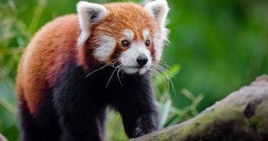 اجمل 20 حيوان في العالم
