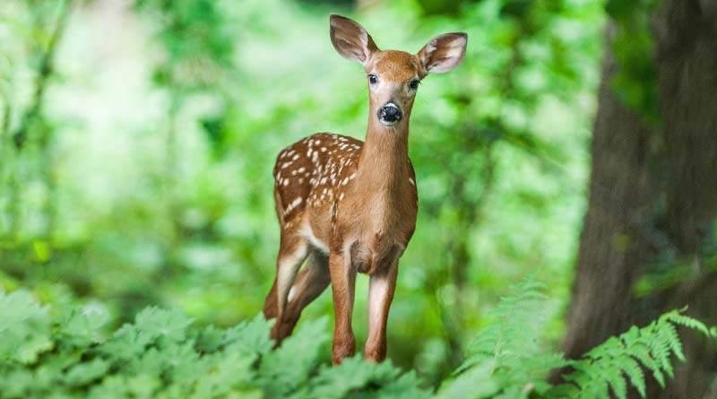 ما هي الحيوانات البرية ؟