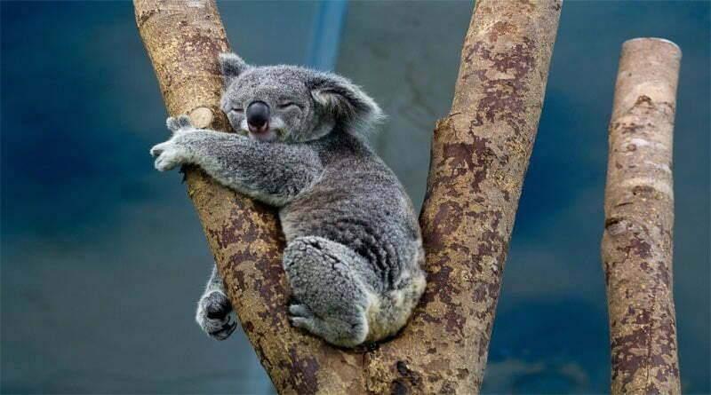أكثر 4 حيوانات تنام بكثرة