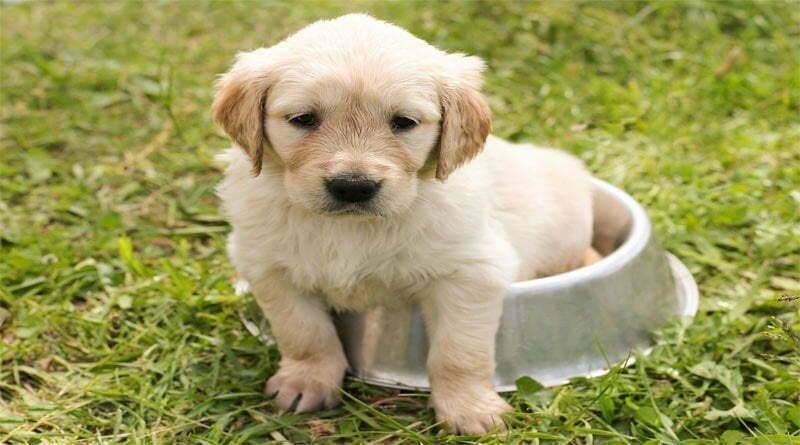 اكتشف لماذا تدفن الكلاب طعامها