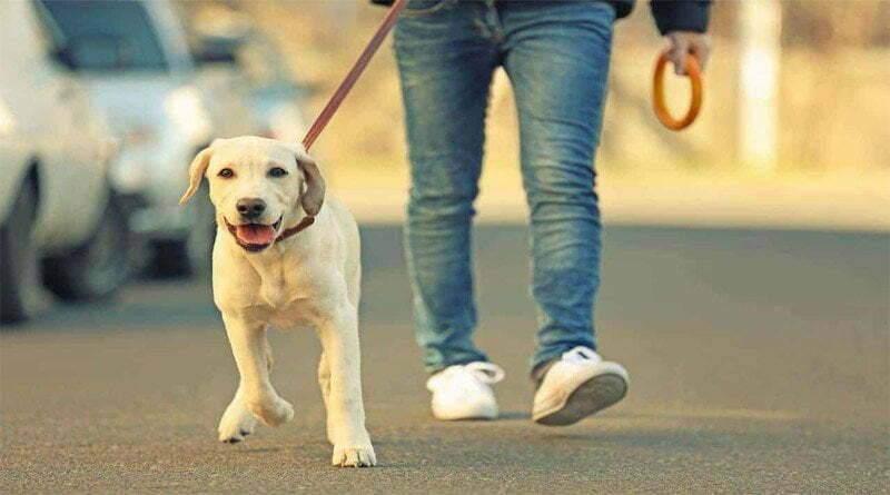المشي اليومي 5 أسباب للإبقاء على هذا الروتين