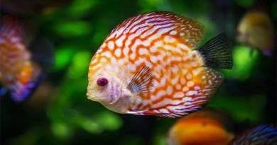 تعرف على 4 أسماك مذهلة تعيش في المياه العذبة