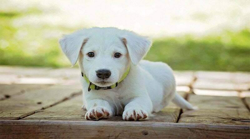 تعليم الكلاب للمبتدئين 5 خطوات
