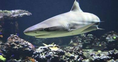 هل صحيح أن أسماك القرش لا تمرض؟