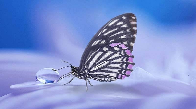 ماذا تعني الفراشة