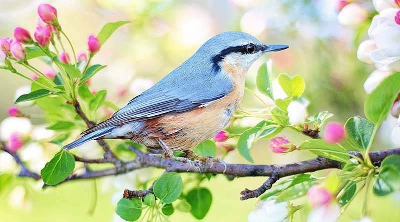 نصائح مهمة عن تربية الطيور في المنزل