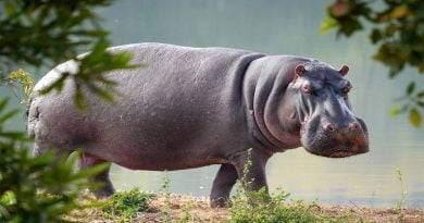 أروع 8 حيوانات تعيش في الأنهار
