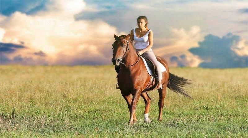 تعلم كيف تتواصل مع الخيول لغة الخيول