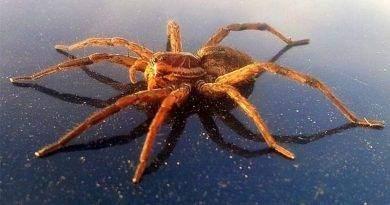 أعلى 10 عنكبوت مميتا