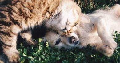 تأمين الكلاب والقطط