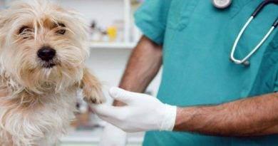 كيف تعتني بحيوانك الأليف بعد الجراحة