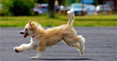 ما هي سلالات الكلاب التي من المرجح أن تهرب؟