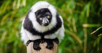 ما الحيوانات التي تعيش في الغابة السوداء