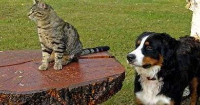 هل تستطيع الكلاب والقطط أن تأكل نفس الشيء؟