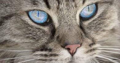 10 أعراض خطيرة على الحيوانات الأليفة التي لا يمكن أن تنتظر العلاج