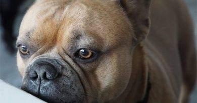 9 أشياء يمكن أن تتوقعها الكلاب
