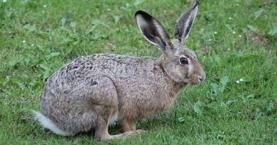 سلالات الكلاب التي يمكن أن تتماشى مع الأرانب