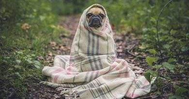 هل من الآمن استخدام شامبو الأطفال على الكلاب؟