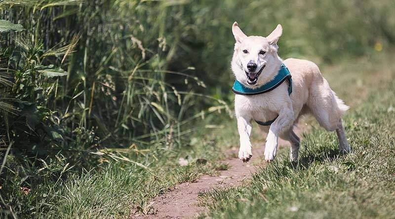 9 نصائح لتمشية كلبك بسهولة
