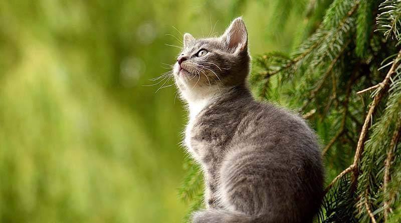 الحيوانات الأليفة: دعم معنوي كبير للمراهقين
