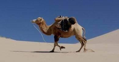 ما هي الحيوانات التي تعيش في الصحراء
