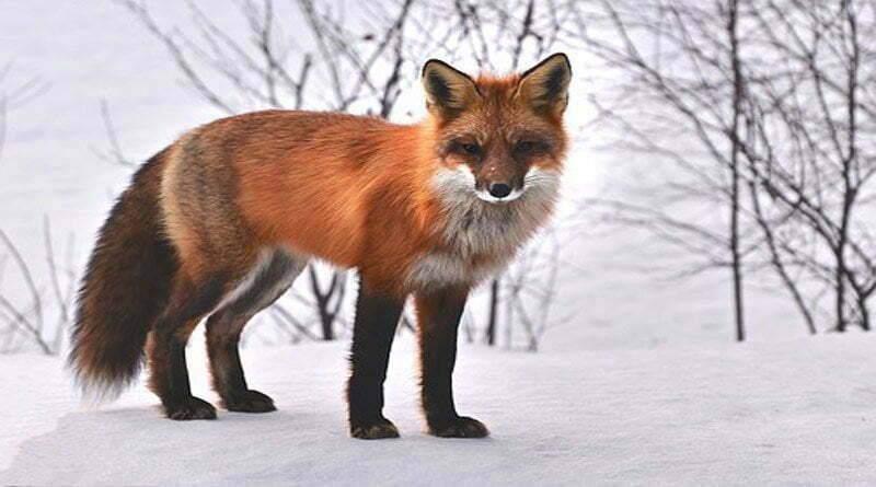 اكتشف 5 حيوانات تعيش في الثلج