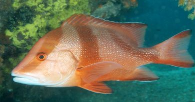 كيف يؤثر تلوث المياه على الأسماك