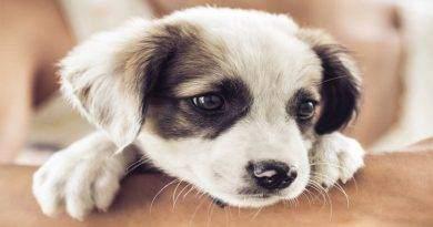 ما هي أكثر الأدوية خطورة على الكلاب