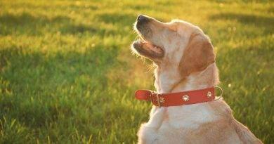 ما هي فوائد الشمس للحيوانات الأليفة؟