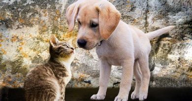 كيف تجعل القطط والكلاب تتعايش