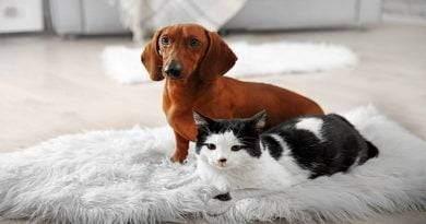أهمية فيتامين E للقطط والكلاب